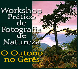 Workshop Pr�tico de Fotografia de Natureza
